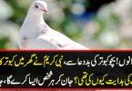 بچو کبوتر کی بد دعا سے