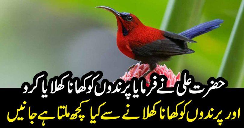 پرندوں کو کھانا کھلانے