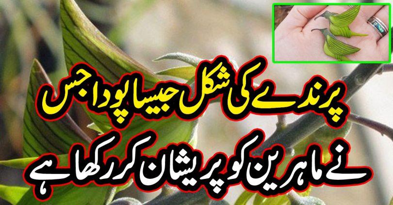 پرندے کی شکل جیسا پودا